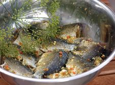 Free Preparing Freshwater Fish Stock Photo - 1352250