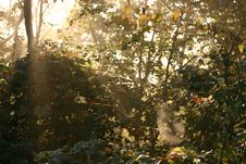 Free Sunrise Spider Stock Images - 1352334