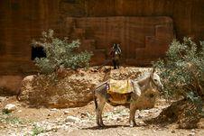 Free Donkeys In Desert Stock Photography - 1352772