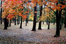 Free Autumn Scene Royalty Free Stock Photography - 1354327