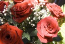 Free Bunch Of Red Roses Stock Photos - 1354373