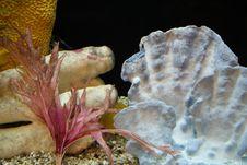 Free Inside Aquarium Stock Images - 1354694