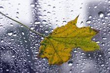 Free Leaf On Glass Royalty Free Stock Photo - 1357055