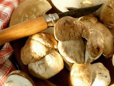 Free Mushrooms In A Plate With A Knife And A Towel Royalty Free Stock Images - 1357599