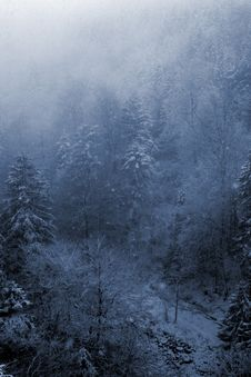 Free Forest Royalty Free Stock Images - 1357799