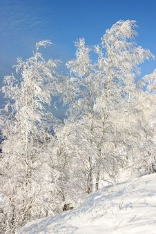 Snow Forest Royalty Free Stock Images