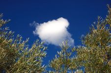 Free Cloud And Trees Stock Images - 1358514