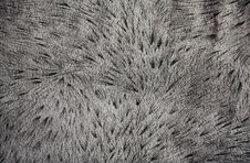 Free Background Of Gray Lynx Fur Stock Photos - 13506263
