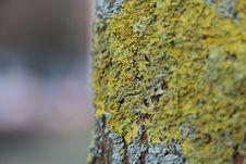 Free Green And Grey Tree Bark Royalty Free Stock Photography - 135065537