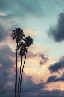 Free Silhouette Of Palm Trees Royalty Free Stock Photography - 135065637