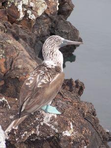 Free Bird, Fauna, Beak, Seabird Royalty Free Stock Photos - 135105478