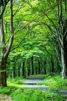 Free Woodland, Nature, Vegetation, Green Stock Images - 135105674