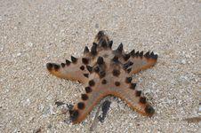 Free Starfish, Marine Invertebrates, Invertebrate, Echinoderm Royalty Free Stock Photo - 135105855