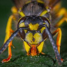 Free Macro Photography Of Wasp Royalty Free Stock Image - 135195196