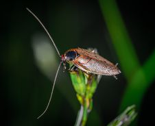 Free Close-Up Photo Of Cockroach Perched On Plant Royalty Free Stock Photos - 135195208