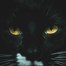 Free Close-Up Photo Of Black Cat Stock Photos - 135195663