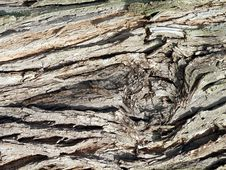 Free Old Tree Bark Royalty Free Stock Photos - 13525638