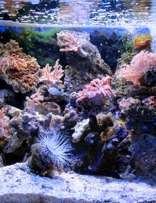 Free Coral Reef, Reef, Coral, Water Royalty Free Stock Photos - 135310168