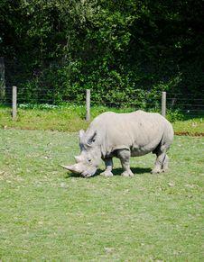 Free Fauna, Grass, Pasture, Rhinoceros Royalty Free Stock Image - 135310836