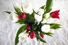Free White And Red Tulip Flowers Royalty Free Stock Image - 135337986