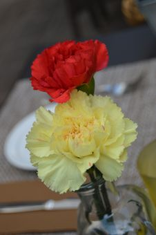 Carnation Red And Yellow Flowers Stock Photo