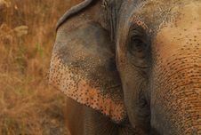 Free Elephant Eye Stock Photos - 13549483