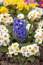 Free Nursery-garden Royalty Free Stock Image - 13559606