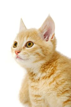 Free Kitten Is Looking Stock Image - 13550671