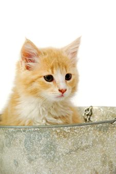 Kitten In Bucket Stock Image