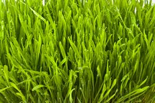 Free Grass Stock Photos - 13550773
