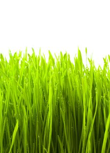Free Grass Royalty Free Stock Image - 13550806