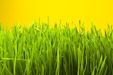 Free Grass Stock Photography - 13550822