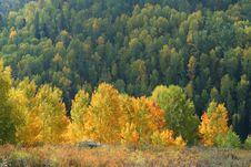 Free Autumn Trees Stock Photos - 13551363