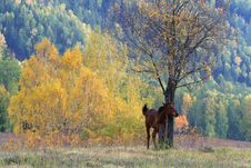 Free Lonely Horse Stock Images - 13551364