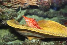 Free Orange-White Fish Royalty Free Stock Image - 13552026