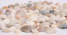 Free Seashells Royalty Free Stock Image - 13552286
