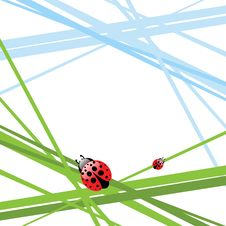 Grass With Ladybird Stock Images