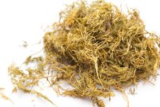 Free Dried Dillweed Stock Image - 13552371