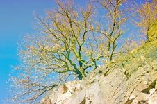 Free Tree On A Cliff Stock Photo - 13552720