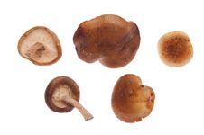 Free Shitake Mushrooms Royalty Free Stock Image - 13552766