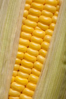 Free Sweet Corn Royalty Free Stock Photo - 13553285