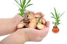 Free Hand And Coins With Plant Stock Images - 13553334