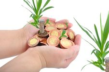 Free Hand And Coins With Plant Royalty Free Stock Photos - 13553348