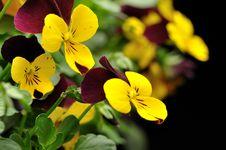 Free Yellow Flower Royalty Free Stock Photos - 13554058