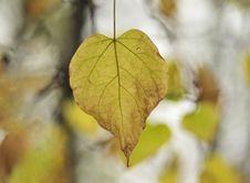 Free Foliage Stock Image - 13554061