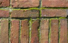 Free Bricks With Moss Royalty Free Stock Photography - 13554317