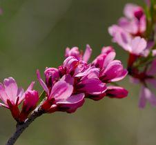 Free Pink Flower Stock Photos - 13554593