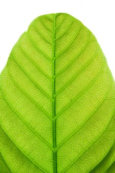 Free Pattern Of Leaf Stock Images - 13554694