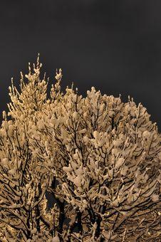 Free Tree With Snow Stock Image - 13555721