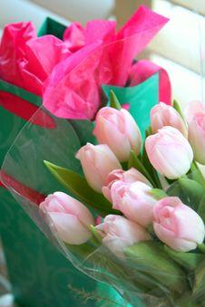 Free Tulips Stock Photography - 13555862